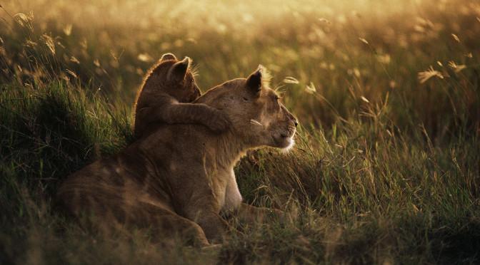 Mãe, deixa-me cuidar de você